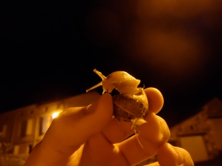 A snail at night in Auvillar